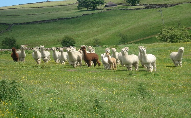 Overbrook Barn | Peak District Online